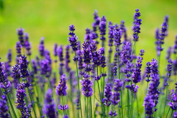 Стиль: 5 способов защититься от назойливых насекомых – фото №2