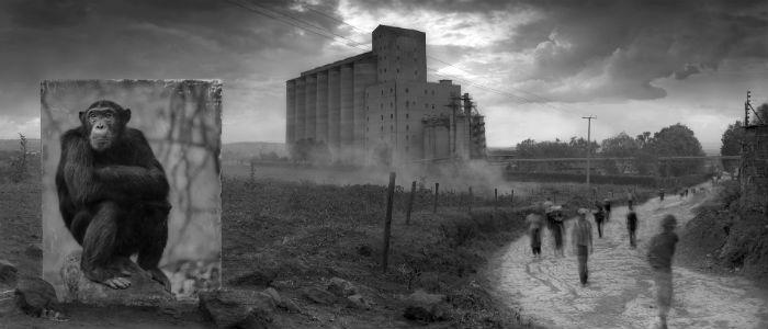 Стиль жизни: Ник Брандт. «Унаследовать пыль» – фото №2