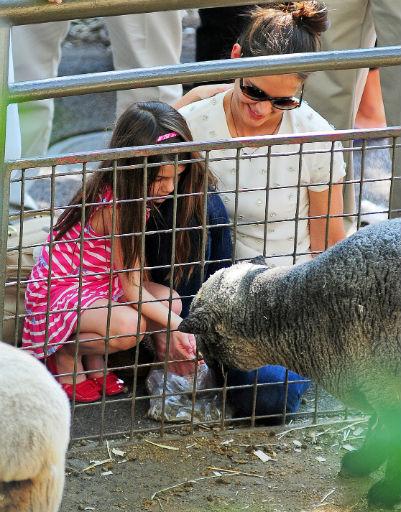 Сури не испугалась покормить овцу