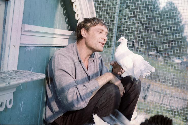 «Любовь и голуби» Александра Михайлова. Невероятная история в личной жизни актера
