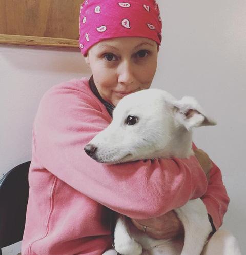 Больная раком Шеннен Доэрти нашла спасение в работе