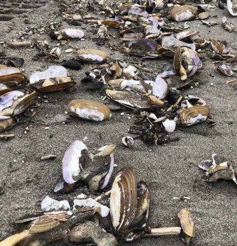 На Камчатке погибли редкие виды морских обитателей
