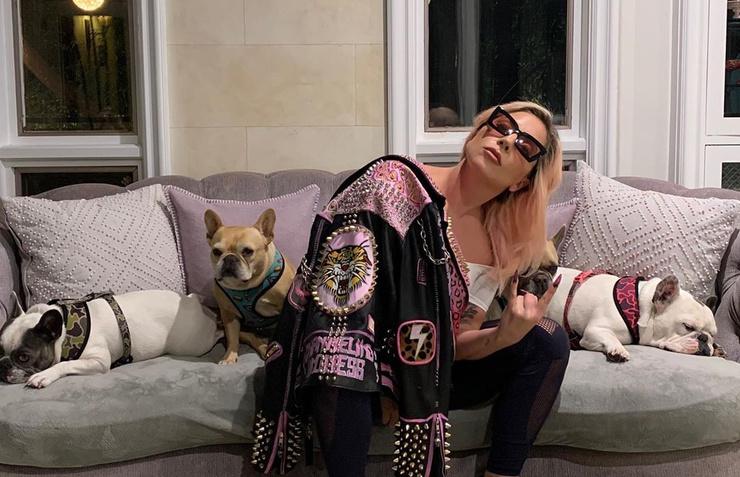 Леди Гага заперлась в доме вместе с собаками
