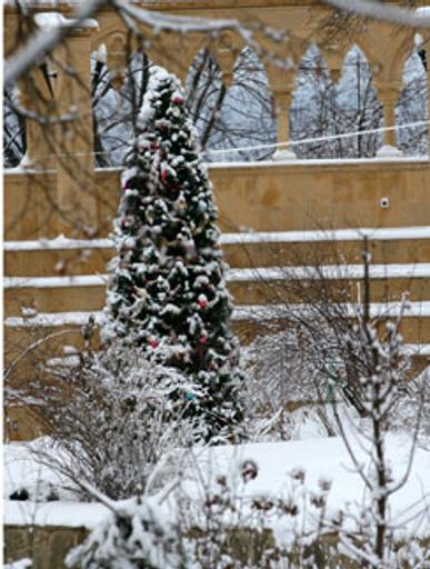 Около этой елки гости Пугачёвой и Галкина в новогоднюю ночь загадывали желание