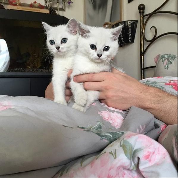 Белоснежные котята Анастасии Макеевой