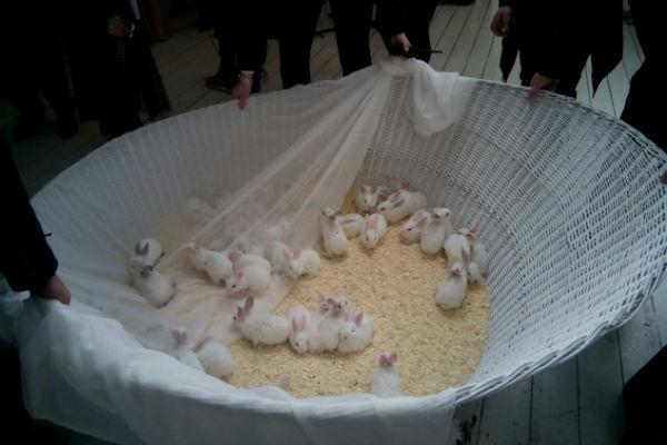 Гости разбирали чудных кроликов один за другим