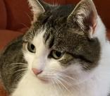 Житель Новороссийска продает кошку-«целительницу» за 20 миллионов рублей
