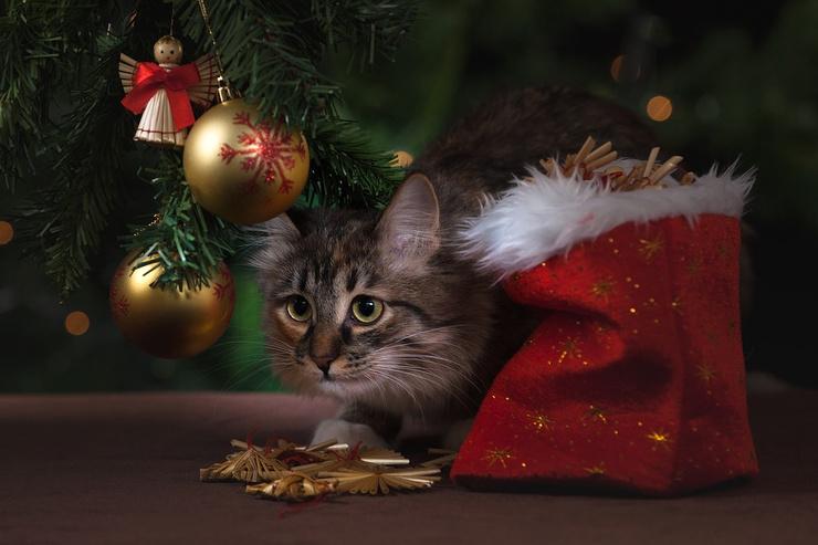 Весы должны прочувствовать новогоднюю атмосферу