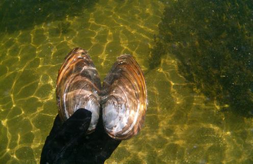 18 августа 2011 года: «Первый раз снимал «мыльницей» подводный мир Волги. Очень интересно, но фото – так себе».